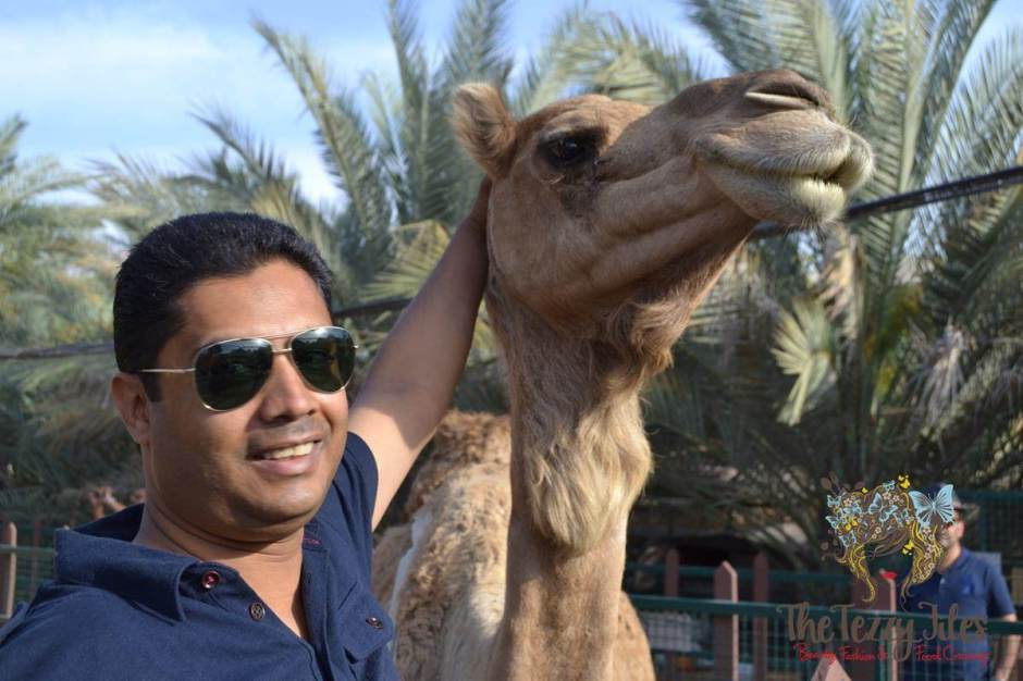 emirates park resort camel