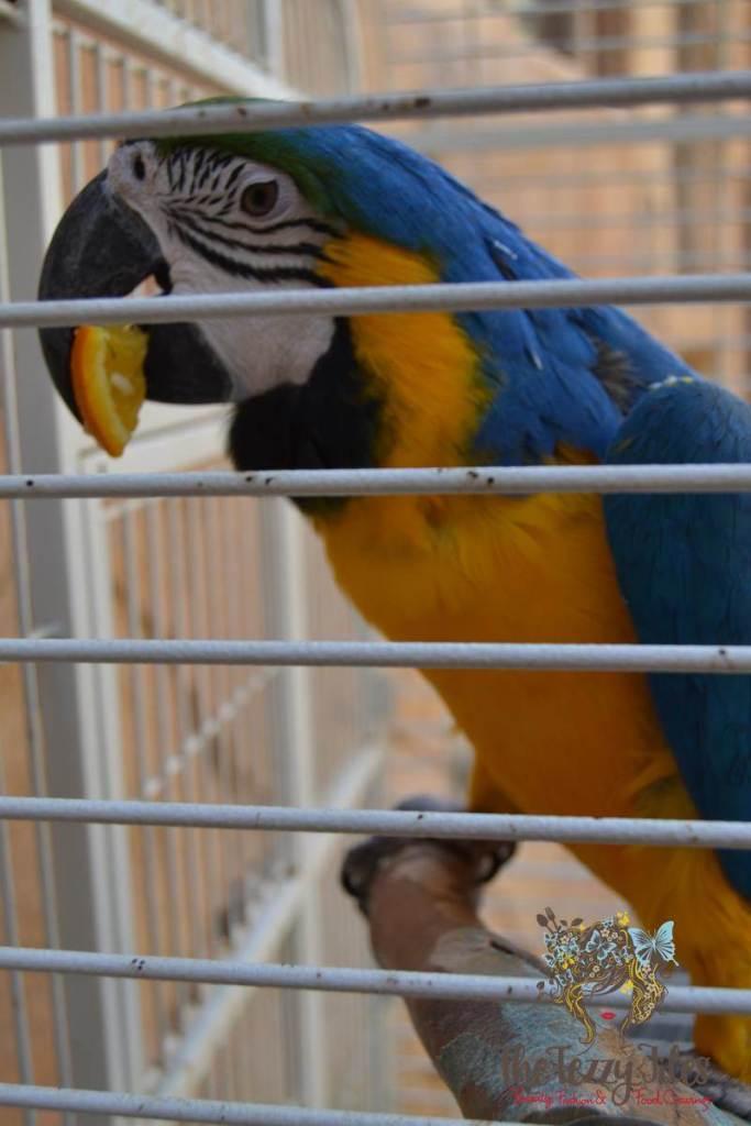 emirates park resort parrot