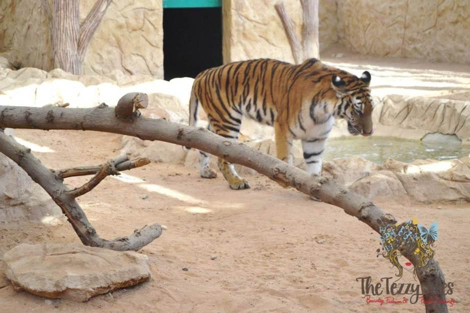 emirates park resort tiger