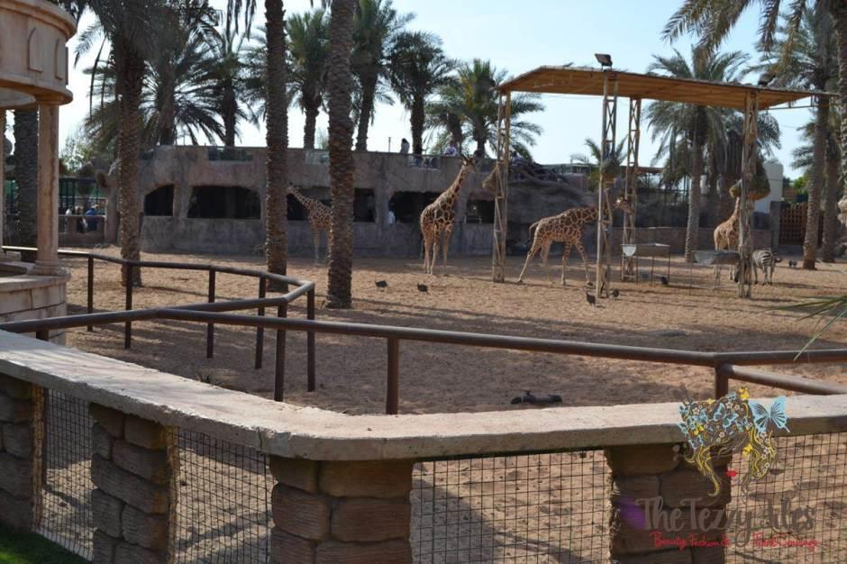 emirates park resort view