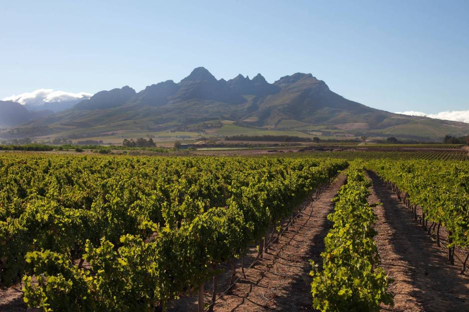 Vineyards in Helderberg