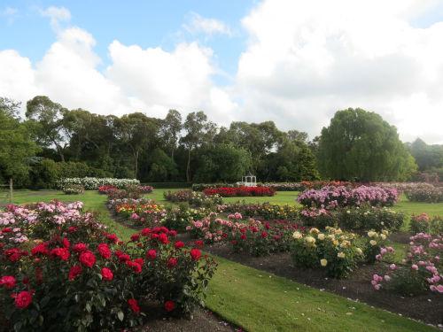palmerston north rose garden Dugald Mackenzie Rose Garden