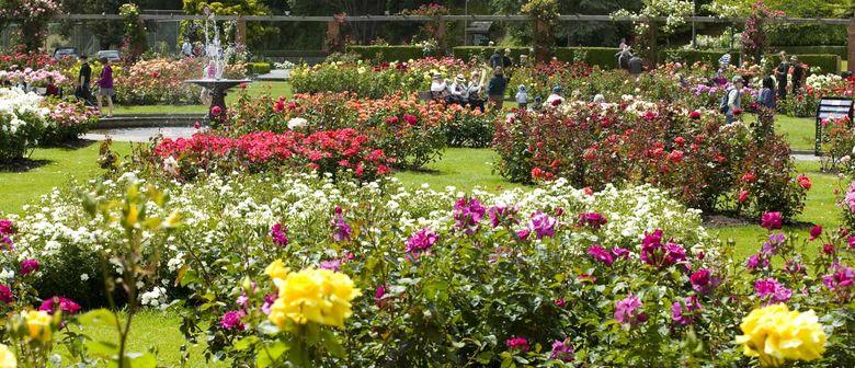 palmerston north rose garden Dugald Mackenzie Rose Garden1