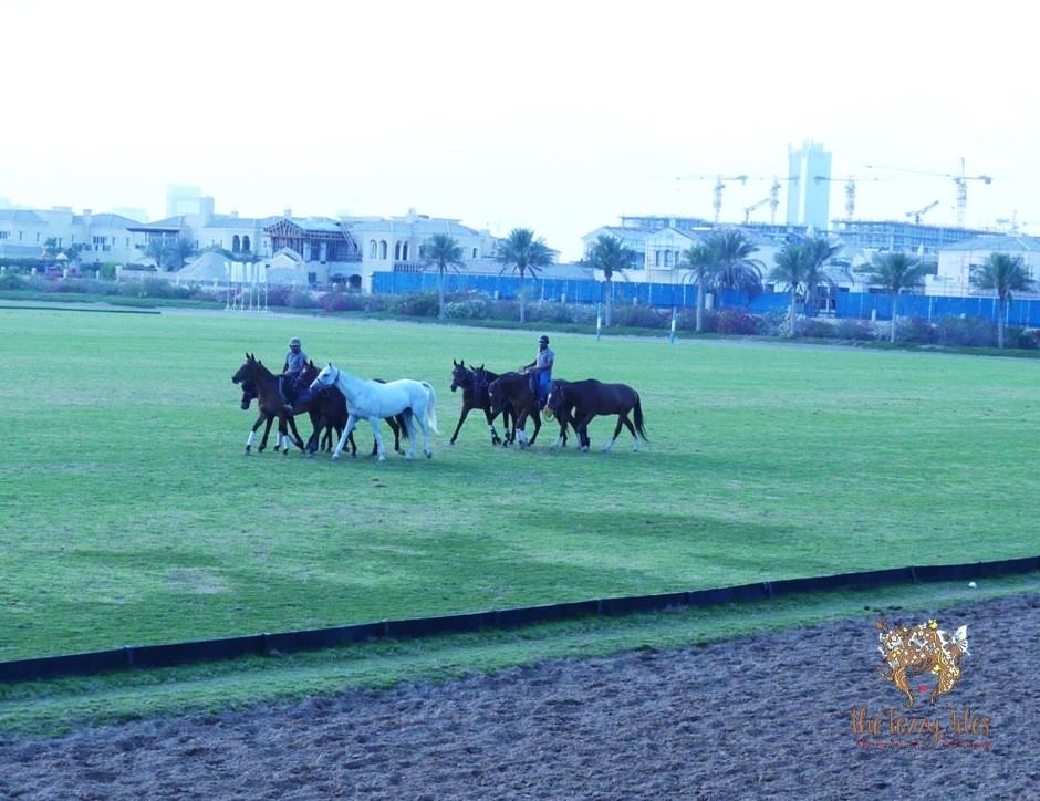 dubai-polo-club-equestrian-club-dubai-weddings-venue-horses-baraati-bloggers-event-sari-saree-indian-blog-dubai-india-uae-wedding-bloggers-lifestyle-blog-uae-2