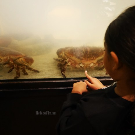 Crab Market DIFC Review Food Blog UAE Blogger Zomato UAE Kamchatka Premium Seafood (4)